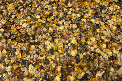Autumn leaves texture Royalty Free Stock Photos