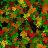 Autumn Leaves Texture. A multicolored autumn leaves background Royalty Free Stock Photos