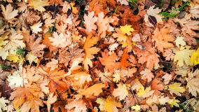 Autumn leaves. stock photos