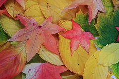 Autumn leaves texture Royalty Free Stock Photography