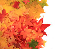 Autumn leaves texture Royalty Free Stock Image
