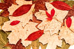 Autumn Leaves Texture Background Royalty Free Stock Photo