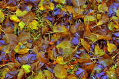 Autumn Leaves Texture Stock Image