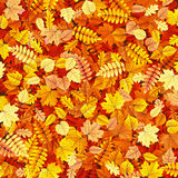 Autumn leaves texture. EPS 10 Stock Photos