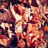 Autumn leaves texture Royalty Free Stock Images