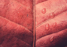 Autumn leaves texture and water drop Stock Photo