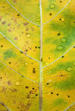 Autumn leaves texture and water drop Royalty Free Stock Photos