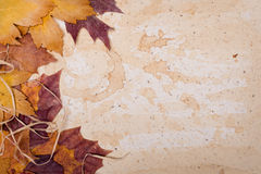 Autumn leaves on textured paper. Background, space Stock Photography
