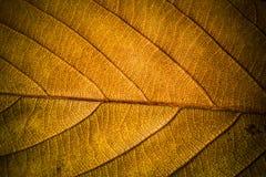 Autumn Leaves Textuur van de herfstbladeren Achtergrond van bladeren Stock Foto's