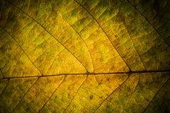 Autumn Leaves Textuur van de herfstbladeren Achtergrond van bladeren Royalty-vrije Stock Afbeelding