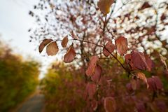 Autumn leaves on tree stock photography