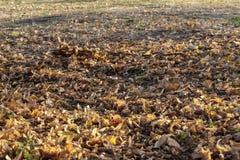 Autumn Leaves tombé, mi-octobre photographie stock libre de droits