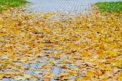 Autumn Leaves tombé par jaune sur le trottoir Image stock