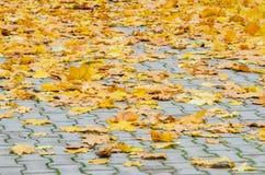 Autumn Leaves tombé par jaune sur le trottoir Photo stock