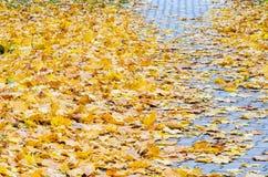 Autumn Leaves tombé par jaune sur le trottoir Image libre de droits