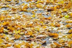 Autumn Leaves tombé par jaune sur le trottoir Photos libres de droits