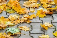 Autumn Leaves tombé par jaune sur le trottoir Images libres de droits