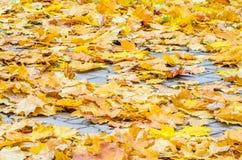 Autumn Leaves tombé par jaune sur le trottoir Photographie stock
