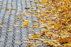 Autumn Leaves tombé par jaune sur le trottoir Photos stock
