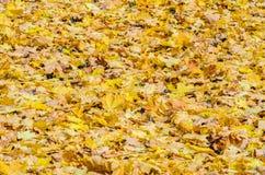 Autumn Leaves tombé par jaune sur le trottoir Images stock