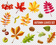 Autumn Leaves Transparent Set Illustration Libre de Droits