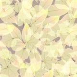 Autumn Leaves transparente EPS10 más Foto de archivo