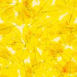 Autumn Leaves transparente EPS10 más stock de ilustración