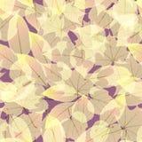 Autumn Leaves transparente EPS10 más Fotos de archivo libres de regalías