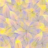 Autumn Leaves transparente EPS10 más Imagen de archivo libre de regalías