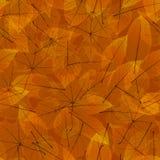 Autumn Leaves transparente EPS10 más ilustración del vector
