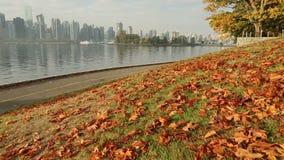 Autumn Leaves, Transportwagenschuß Stanley Park, Vancouver stock video