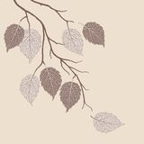 Autumn leaves on a tree Royalty Free Stock Photos