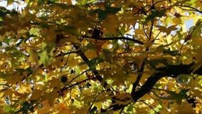 Autumn Leaves On Tree Blowing en brisa almacen de metraje de vídeo