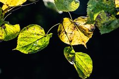 Autumn leaves on a tree branch lit by warm gentle autumn sun stock photography