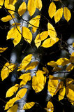 Autumn leaves on a tree branch Stock Photos