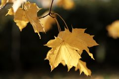 Autumn leaves on a tree branch Stock Image