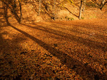 Autumn Leaves and Tree Shadows Stock Photos