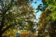 Autumn leaves on tree tops with sky. Colorful autumn leaves on tree tops with blue sky Royalty Free Stock Images
