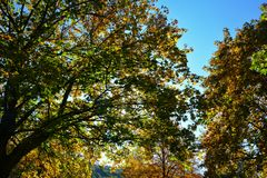Autumn leaves on tree tops with sky. Colorful autumn leaves on tree tops with blue sky Stock Photos