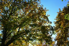 Autumn leaves on tree tops with sky. Colorful autumn leaves on tree tops with blue sky Royalty Free Stock Image