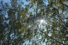 Autumn leaves on tree tops with sky and  sun beams. Colorful autumn leaves on tree tops with sky and  with sun beams Stock Photo