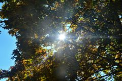 Autumn leaves on tree tops with sky and  sun beams. Colorful autumn leaves on tree tops with sky and  with sun beams Royalty Free Stock Image