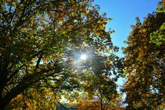 Autumn leaves on tree tops with sky and  sun beams. Colorful autumn leaves on tree tops with blue sky and  with sun beams Royalty Free Stock Image