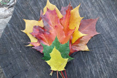 Autumn  leaves. On the tree trank Stock Images