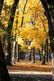 Autumn leaves on a tree. Warm autumn day. Stock Photography