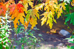 Autumn leaves, trees Stock Image