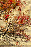 Autumn leaves on trees Royalty Free Stock Photography