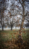 Autumn. Leaves and trees in early morning fog Royalty Free Stock Photo