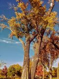 Autumn leaves in the fall Royalty Free Stock Photos