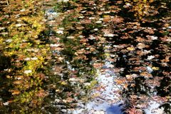 Autumn leaves with trees and foliage reflection over mountain lake water. Autumn leaves with trees pines and foliage reflections over mountain lake water during stock photo